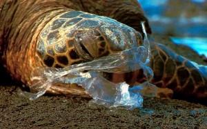 Injured Sea Turtle