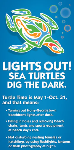 Lights Out! Sea Turtles Dig in the Dark.